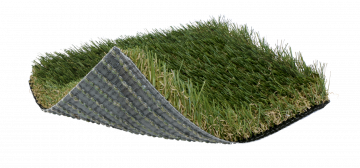 SoftLawn® Golden Fescue